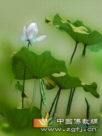 非礼少女 (图文)—佛典故事