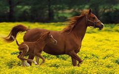 骏马和驴子